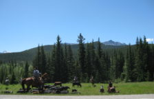 Kananaskis Cattle Drive